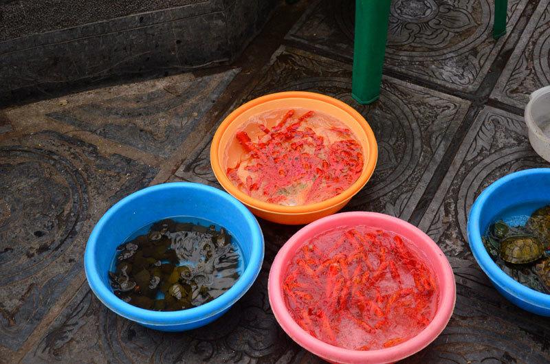 Kiếm bạc triệu nhờ bán ốc, lươn phóng sinh ngày Rằm