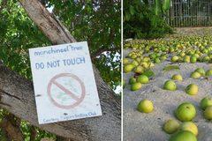Cận cảnh loài cây giết người kinh dị nhất thế giới