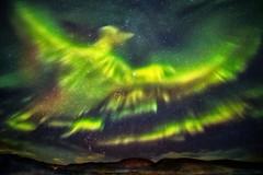 Mãn nhãn cảnh cực quang hình chim Phượng hoàng lửa