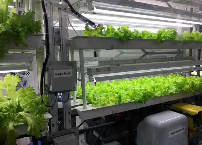 cà chua, xà lách, nông nghiệp thông minh, FPT, Fujitsu