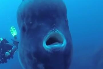 Phát hiện cá khổng lồ ở biển Bồ Đào Nha