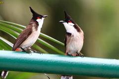 Trộm chim chào mào của GĐ Sở tuổi 30, 2 người bị truy tố