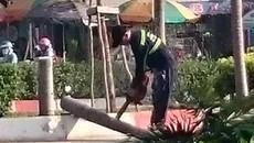 TPHCM: Hàng loạt cây cau đang xanh tốt bị bức tử