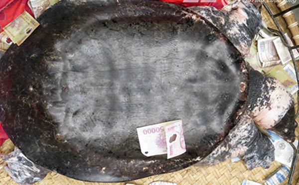 Bắt được rùa cụ khủng xôn xao Hải Phòng