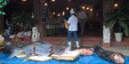 Xẻ thịt cá khủng 200 kg chiều dân nhậu