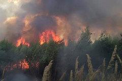 300 người dập đám cháy suốt 2 ngày trên núi Chứa Chan