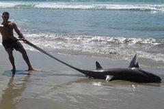 """Phát hiện """"quái vật"""" dạt vào bờ biển New Zealand"""