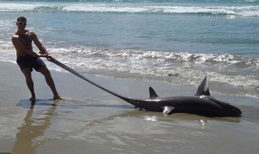 Phát hiện 'quái vật' dạt vào bờ biển New Zealand