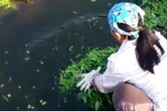 Kinh hoàng rửa rau bằng nước đen ngòm hơn sông Tô Lịch