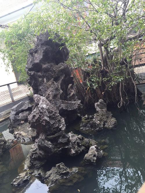 Sự thật kho báu dưới cây sanh cổ 14 tỷ ở Huế