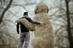Ngỡ ngàng chú chó cao lớn hơn người