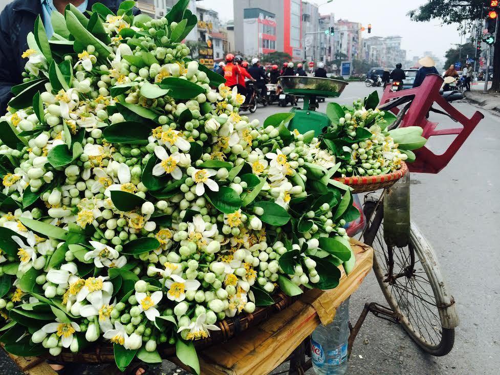 8/3: Mua vài cân hoa bưởi 'ướp' hương phòng vợ