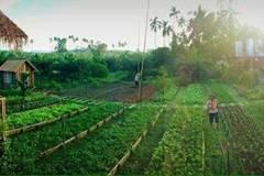 Mê mẩn vườn rau sạch đang gây sốt mạng xã hội