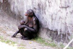 5 loài động vật theo chế độ mẫu quyền