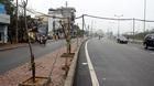 Hà Nội: Cột điện bằng tre mọc trên đường hơn 6 ngàn tỷ