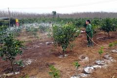 Góp 50 triệu trồng cam sạch, lãi 25 triệu/năm?