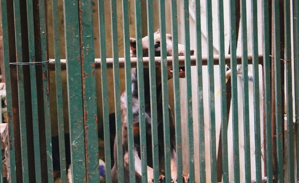 Hà Nội: 4 con chó dữ lao vào cắn xé, chủ phải nhập viện