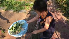 Vườn rau trái cả nhà ăn không hết của Lê Phương