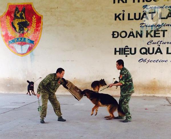 Vụ 4 con chó dữ tấn công: Chủ phải là 'đại ca' của chó nuôi
