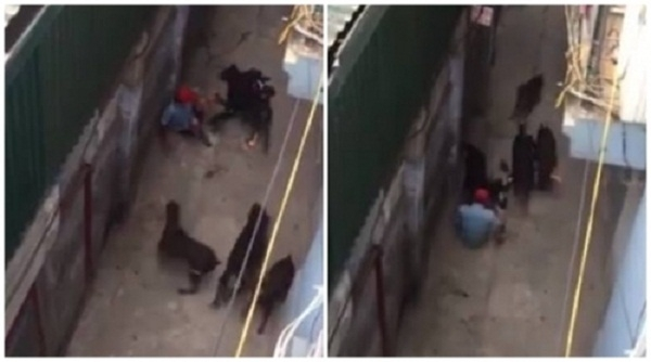 4 chó dữ tấn công chủ vì ăn... quá nhiều thịt