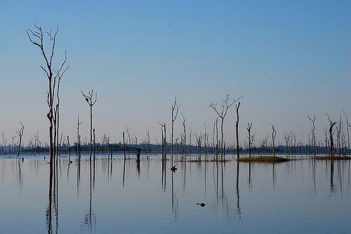 Nguy cơ tuyệt chủng vô số loài do 'bùng nổ' xây đập thủy điện