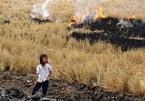Chết khát vì khô mặn, đốt lúa 'tế' trời