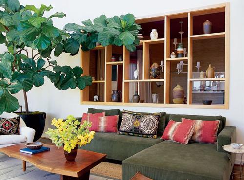 phong thủy nhà ở, cây phong thủy, trồng cây phong thủy hút tài lộc