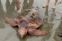 Nghệ An: Rùa lạ trả 300 triệu không bán
