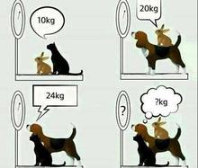 Bài toán thỏ - chó - mèo: Ai giải nhanh nhất