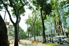 Chặt hạ, di dời 300 cây xanh để thực hiện dự án hạ tầng