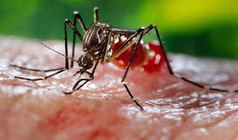 Zika, Virus Zika, xét nghiệm, triệu chứng Zika, sốt xuất huyết