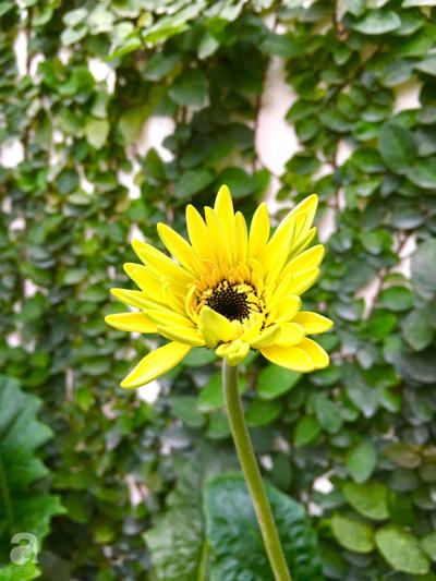 """Bà mẹ sở hữu khu vườn 15m² tràn ngập sắc hoa đáng """"ghen tị"""" ở Kim Mã, Hà Nội"""