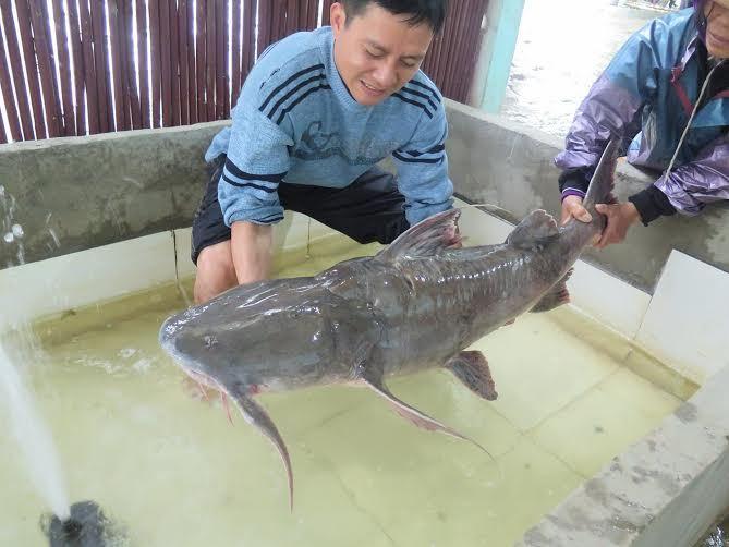 Đại gia chi 70 triệu mua thủy quái sông Đà đãi khách