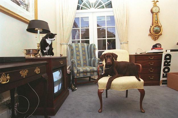 thú cưng, vật nuôi, chó mèo, đệ nhất thú cưng, Nhà Trắng