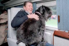 """Ngắm những """"Đệ nhất thú cưng"""" ở Nhà Trắng"""