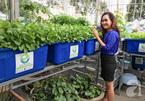 Bỏ việc giám đốc ngân hàng, trồng rau sạch 2 tỷ đồng/tháng