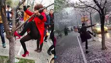 Khách Trung Quốc lại gây bão vì phá hoa anh đào