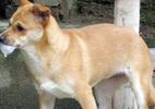 Chó dại cắn chết chủ nhà đang mang thai