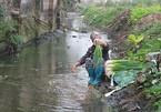Yêu cầu Hưng Yên kiểm tra việc rửa rau ở nước thải đầy phân