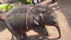 Cứu voi con 2 tháng tuổi rơi xuống giếng