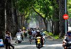 """Vẻ đẹp hàng cây 100 tuổi vừa """"thoát tin"""" bị đốn hạ ở Sài Gòn"""