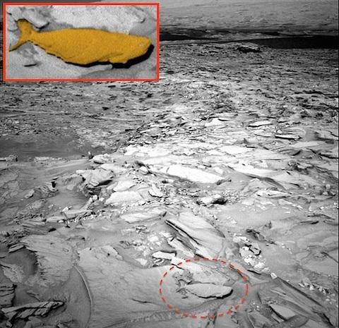 Phát hiện cá khổng lồ sống trên sao Hỏa