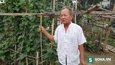Chuyện lạ Hà Nội: Bỏ nhà ra nghĩa địa để sống bên mộ vợ