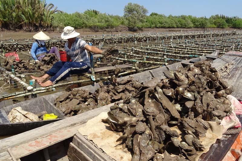 han mặn, thủy điện sông Mekong, đồng bằng sông cửu long