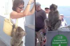 Con khỉ ranh mãnh móc chuối của nữ du khách
