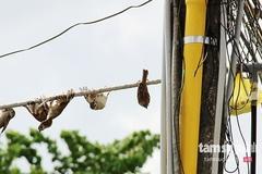 Công nghệ thợ săn 200 con chim sẻ mỗi ngày bằng điện thoại di động
