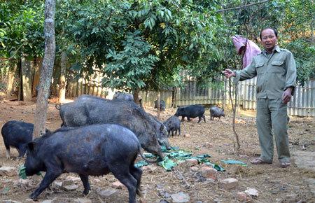 thực phẩm sạch, thịt lợn sạch, đại gia, ăn thử thịt sống, chất cấm, rau sạch