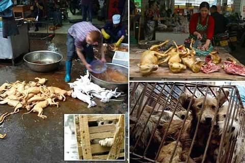 chợ thịt chó TQ