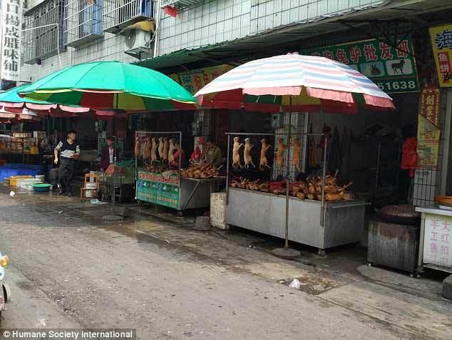 Hình ảnh chợ thịt chó lớn nhất Trung Quốc
