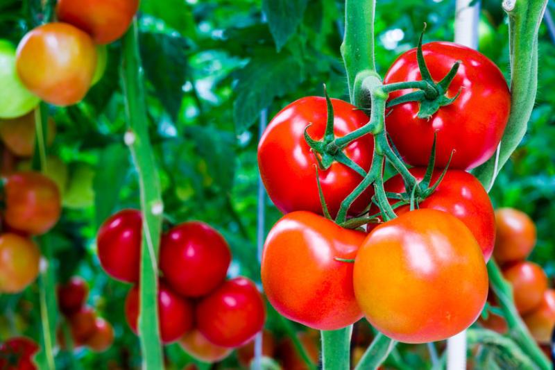 Cà chua: 'Thần dược' cho da nhờn và mụn trứng cá
